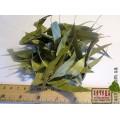 Эвкалипт прутовидный лист (Eucalyptus viminalise Labill.)