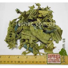 Борщевик обыкновенный лист (Heracleum)