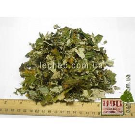 Малина обыкновенная лист (Rubus idaeus)
