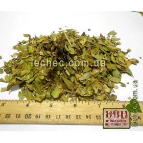 Толокнянка лист (Foxberry)