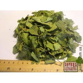 Смородина черная лист (Ribes nigrum)