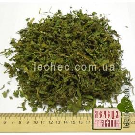 Асперуга простертая лист (Asperugo procumbens)