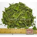 Лофант анисовый лист (Lophanthus anisatus Benth.)
