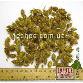 Дурнишник обыкновенный плод (Xanthium strumarium)