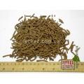 Береза сережки (Betula)