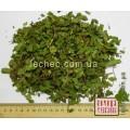 Ежевика сизая побеги (Rubus caesius)