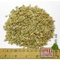 Подсолнечник семена для проращивания