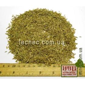 Райграс семена для посева (Lolium L.)