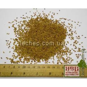 Галега лекарственная, козлятник семена для посева (Galega officinalis). ТОВАРА НЕТ В НАЛИЧИИ!!!