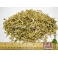 Мордовник шароголовый семя (Echinops sphaerocephalus)