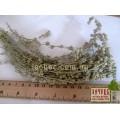 Лапчатка серебристая трава (Potentilla argentea)