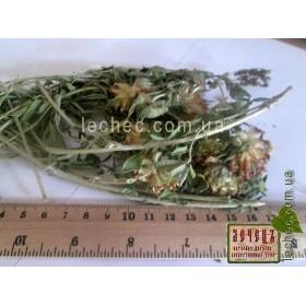 Язвенник крупноголовчатый трава (Anthyllis macrocephala Wend.)