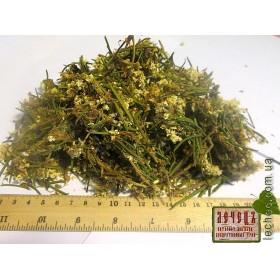 Багульник болотный цвет (Ledum palustre)