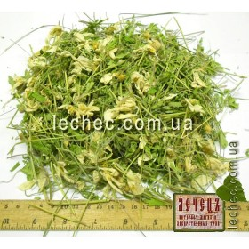 Ветреница белая (Anemone)