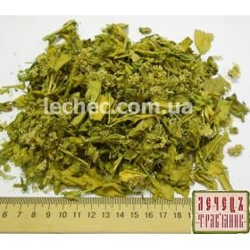 Кардария крупковая трава с цветком (Cardaria draba L. Desv)