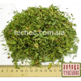 Чина клубненосная трава с цветком (Lathurus Tuberosus)