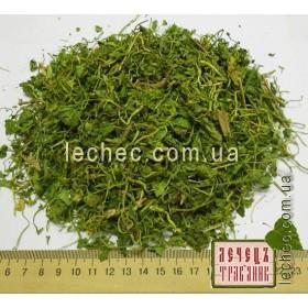 Чистяк (лютик) весенний цвет с травой (Ficaria verna)