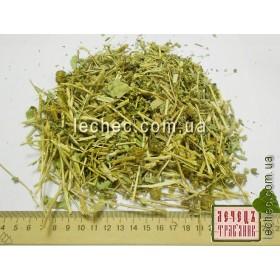 Гринделия растопыренная цвет с травой (Grindelia squarrosa)