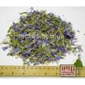 Лен дикий цвет с травой (Linum)