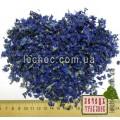 Подснежник или Галантус цветок (Galanthus)