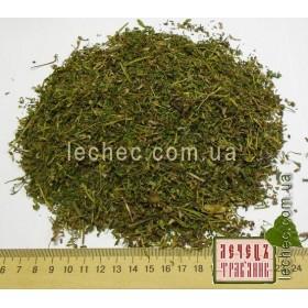Хохлатка плотная цвет с травой (Corydalis solida)
