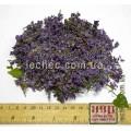 Сирень обыкновенная цвет (Syringa vulgaris )