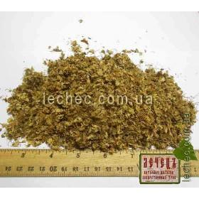 Каштан конский цвет (Aesculus hippocastanum)