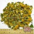 Одуванчик лекарственный цветок (Tarаxacum officinаle) сбор 2016 года