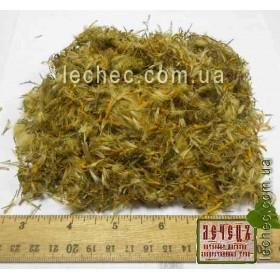 Арника горная цвет (Arnika montana)