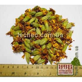 Бархатцы соцветия (Tagetes)