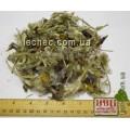 Прострел, сон-трава цвет (Pulsatilla)