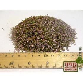 Вереск обыкновенный трава с цветком (Calluna vulgaris (L.) Hill)