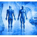 Ваше тело не лжет. Жизненная энергия: раскройте скрытые силы ваших эмоций, чтобы быть здоровым.
